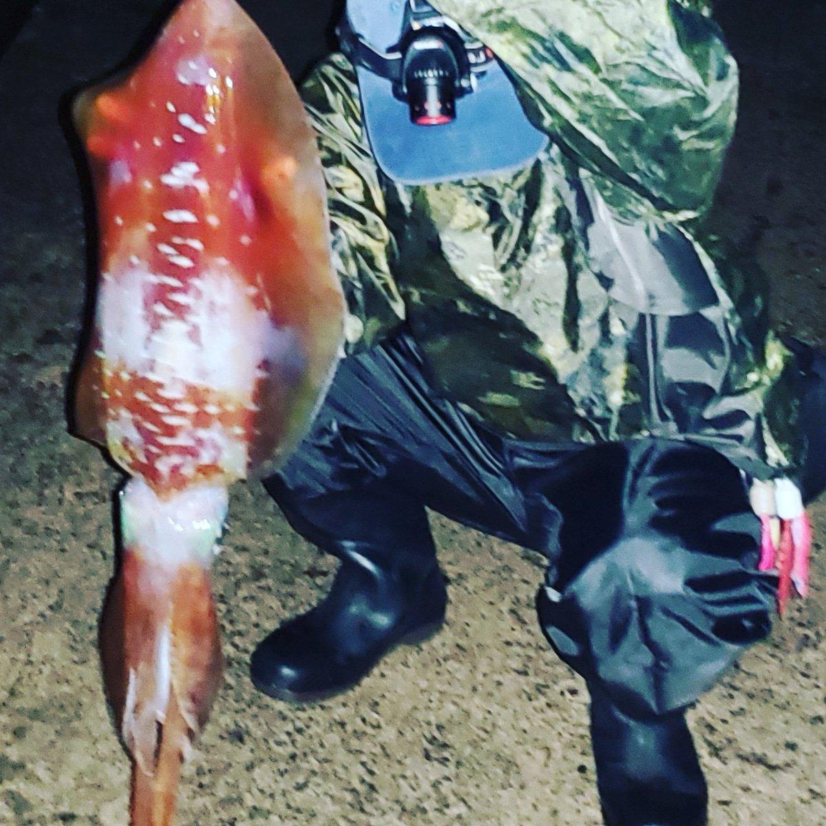 やっとやらかしたーっ!!♪ モンスターとまではいかないけど… 一応赤系。  #沖縄 #釣り #エギング #アオリイカ #赤系アオリイカ #レッドモンスター #okinawa #fishing #Eging #squid #redmonster