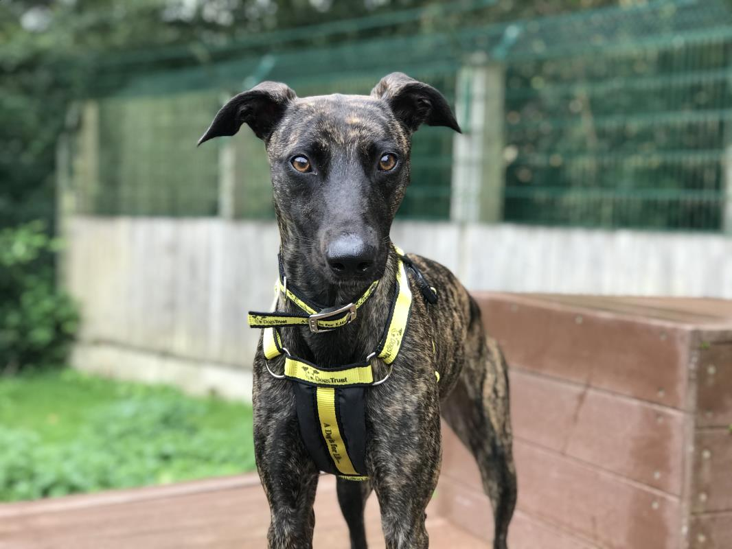 Crumble loves to play!🐶 After she's run off some energy, she loves a snuggle💛 She'll need careful socialisation with other dogs as she can be vocal around them. She'd love an active home with minimal outdoor noise as this can worry her. @DT_Ilfracombe 📍