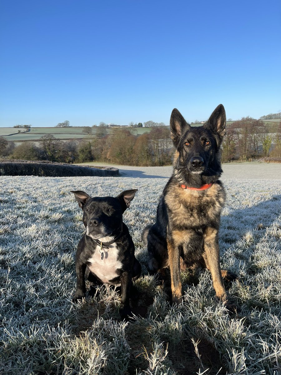 It's a sunny but frosty ❄️ #SaturdayMorning I enjoyed my walk with Stella & my friends.  Have a lovely weekend everyone 🐾🐾