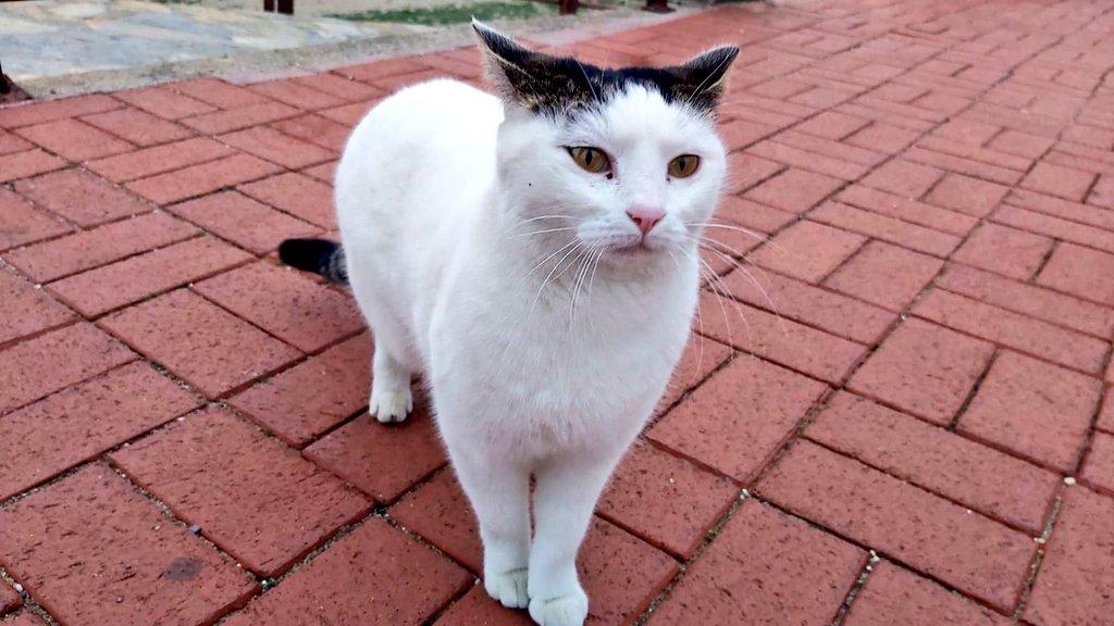 💜hello my dear friends happy day💜🙏 #my📷 #StaySafe #StaySafeStayHealthy #WearYourMask #WearAMask #Caturday #CatsOfTwitter #catlover #cats