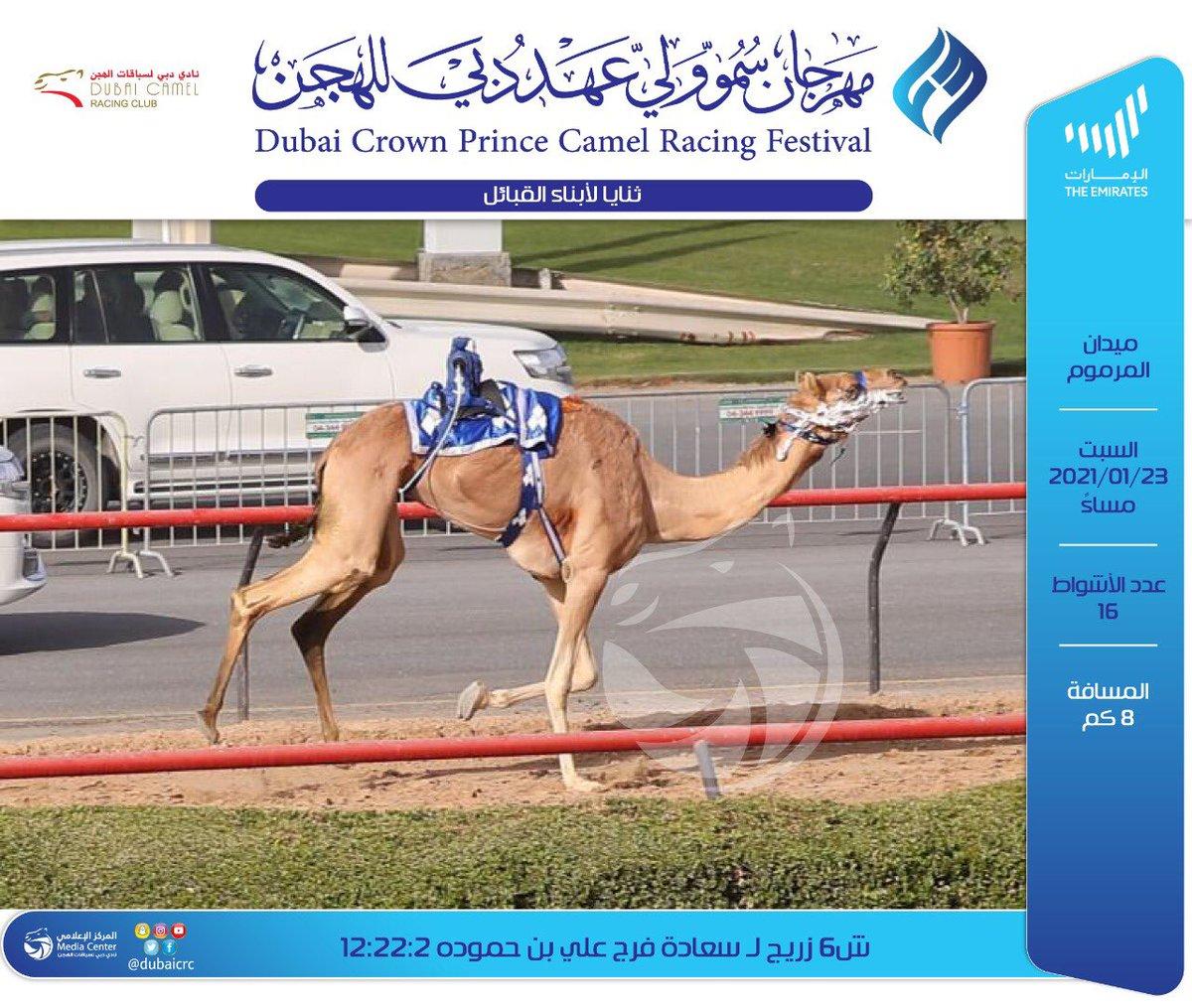 #مهرجان_ولي_عهد_دبي_للهجن_2021 #نادي_دبي_لسباقات_الهجن #المركز_الاعلامي #فزاع #faz3  #almarmoom #Dubaicrc #Racing_club  #Dubai #VisitDubai  #uae #sports #fun #camels #heritage #race #tourism #emirates  #photography  #dubailife  #DCRC #mydubai