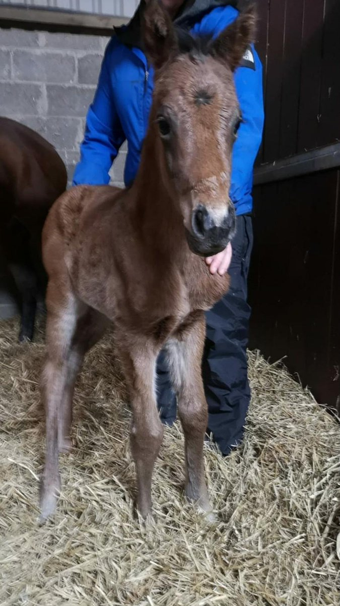 Multiple Group-winning sprinter Invincible Army foal was welcomed to the world at 1:00am this morning 😍  📸 @YeomanstownStud