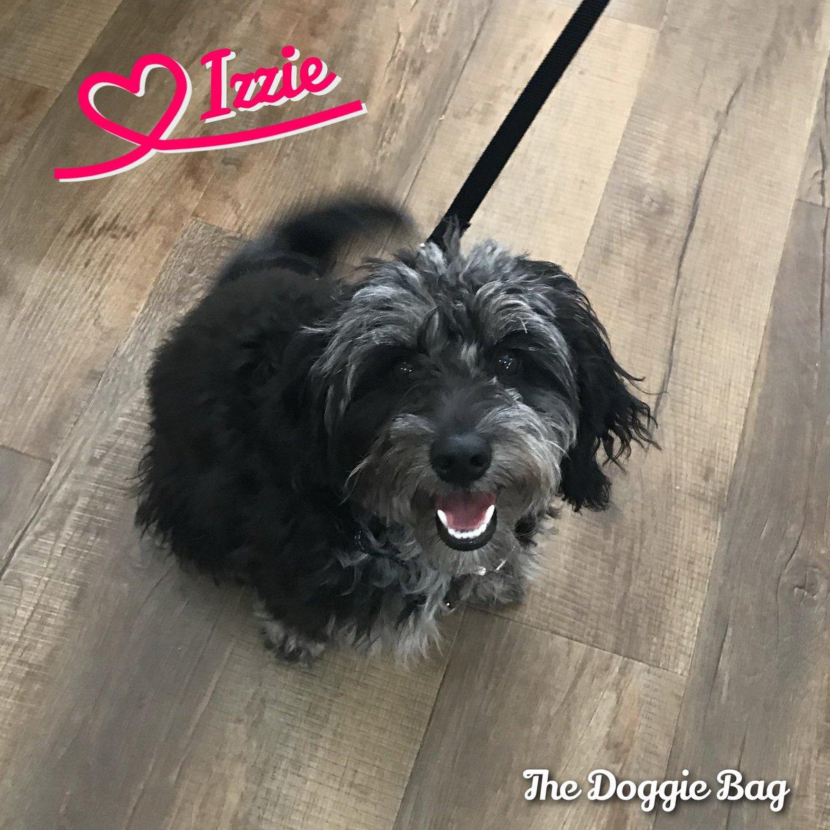 #Smiles are contagious, thank you for Sharing @izzie.theminigoldendoodle 🥰😍😘😁 @doggiebagboutique  #goldendoodle #doodle #doodles #doodlepuppy #puppylove #happydog #thedoggiebag #petboutique #happyplace #dogsoflakeland #lakelanddogs #dogmomsoflkld #lakelandflorida #lakelandfl
