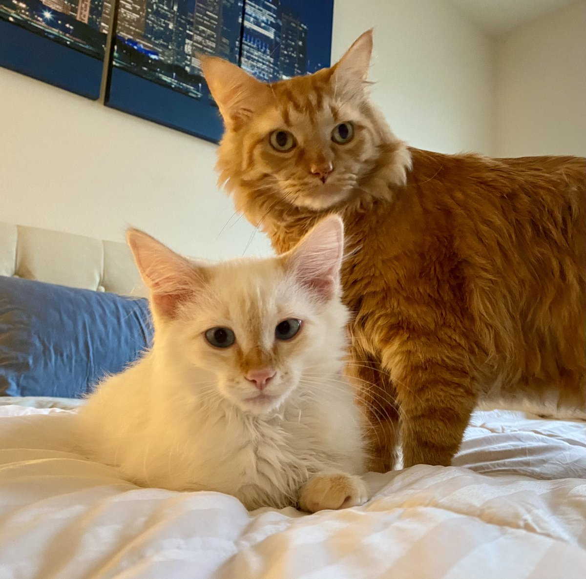 Oh hey, it's #Caturday so here's a picture of my cats!   Also, if @tedcruz had any morals left, he'd resign from the senate for betraying his oath to the U.S. Constitution! #TedCruzIsATraitor