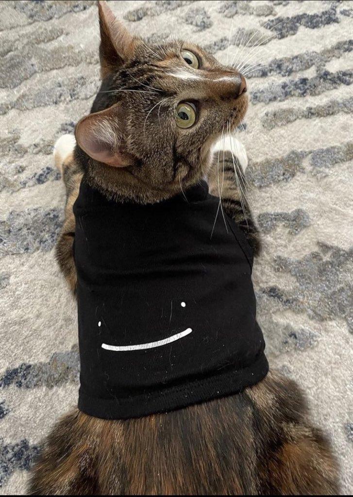 Cat supremacy 😌✨  — #patchestwtselfieday