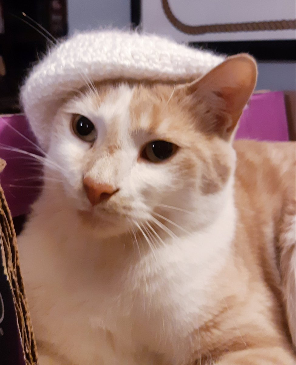 Who would like to see my cats barely tolerating hats (or other things rudely placed on their heads)?  1- Lazlo in a jaunty beret #CatsOfTwitter #Caturday