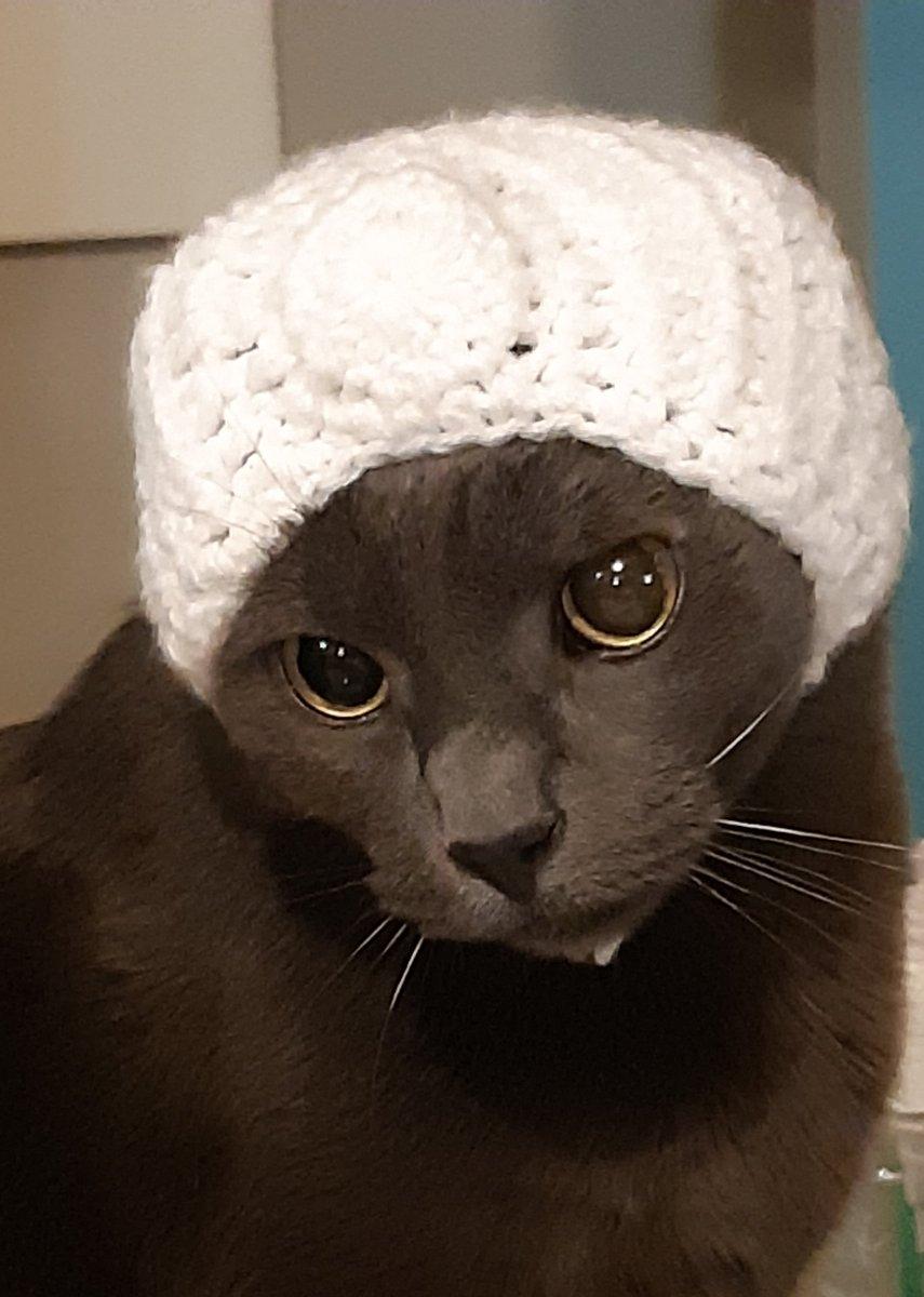3 - Isaac again, rocking a bonnet  #CatsOfTwitter #Caturday