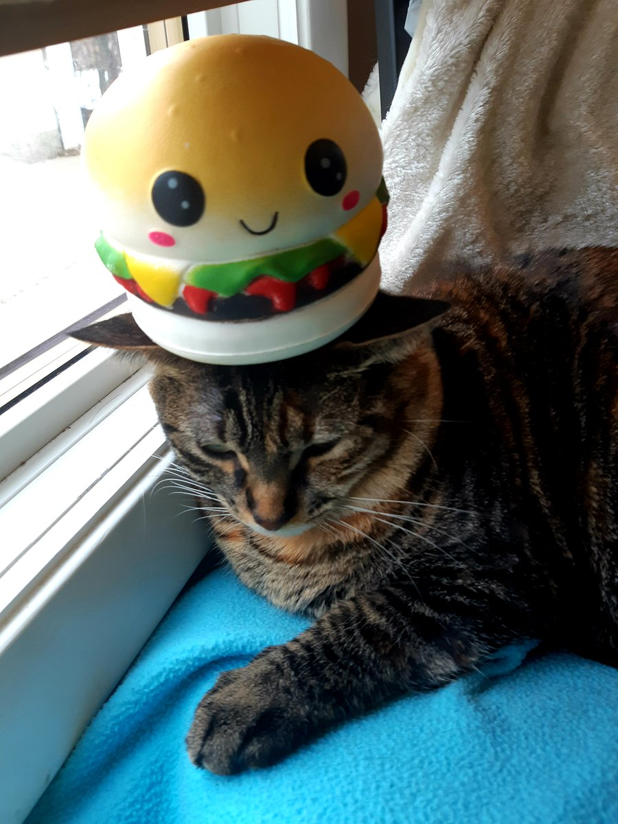 4 - Cate, accepting her fate as the children balance a hamburger squishy on her head  (My fourth cat, Jean-Guy is too old for this bullshit, and told us so)  #CatsOfTwitter #Caturday