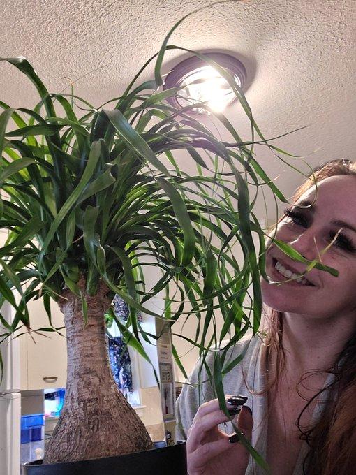 I love this Ponytail Palm!!! https://t.co/QJm75vvsMI