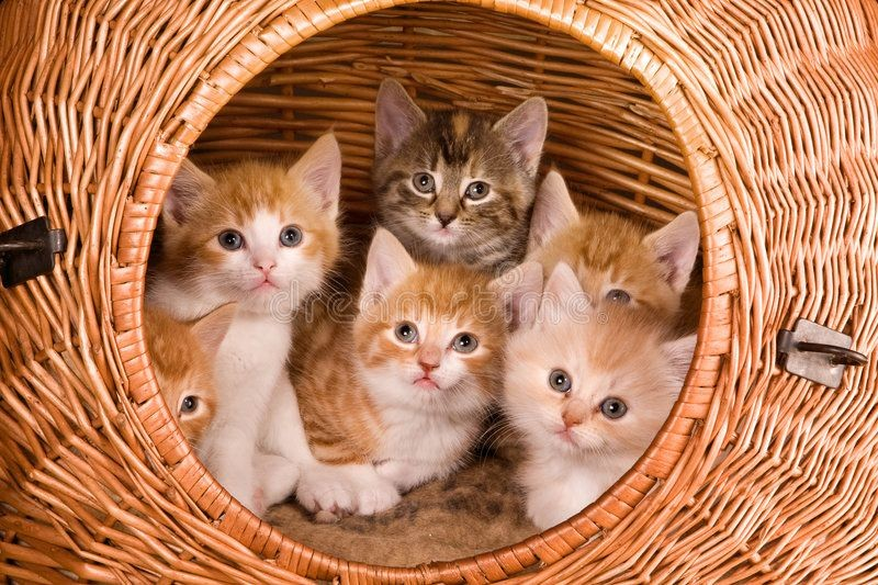 MeowUp!  Good Morning Everyone!  Happy #Caturday  #kittens #cats
