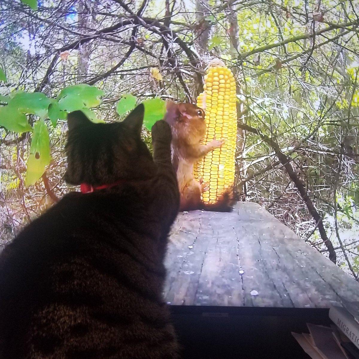 T V for cats on Amazon  Mitsy enjoyed it! #Caturday  #Amazon