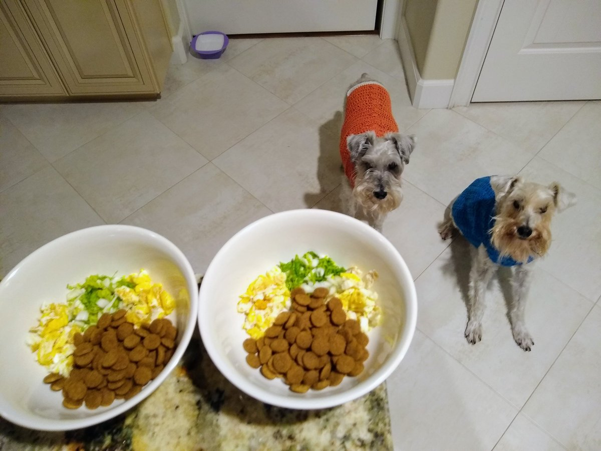 Wow~ We're so impressed w/ Mom's #SaturdayKitchenExpress She cooked yummy eggs & prepped healthy veggies, and she's on time at 6AM sharp👍 Thank you💕 Mom🐾We love you so much💖 Huge #SaturdayMotivation for sure😃 Wishing every1 a #HappySaturday  #SchnauzerGang #SchnauzerBros