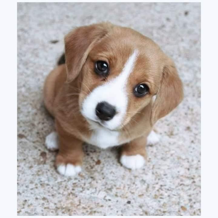 Mans best friend👭 🐶🐶🐕🐕🐕   #puppylove #puppiesofinstagram #photo #puppies #catstagram #puppy #beauty #doglovers #cutedogs #instapet #pupper #catsofinstagram #instadaily #style #ilovemydog #pet #smile #instalike #cute #likeforlikes #petstagram #followme #AdoptDontShop #dog