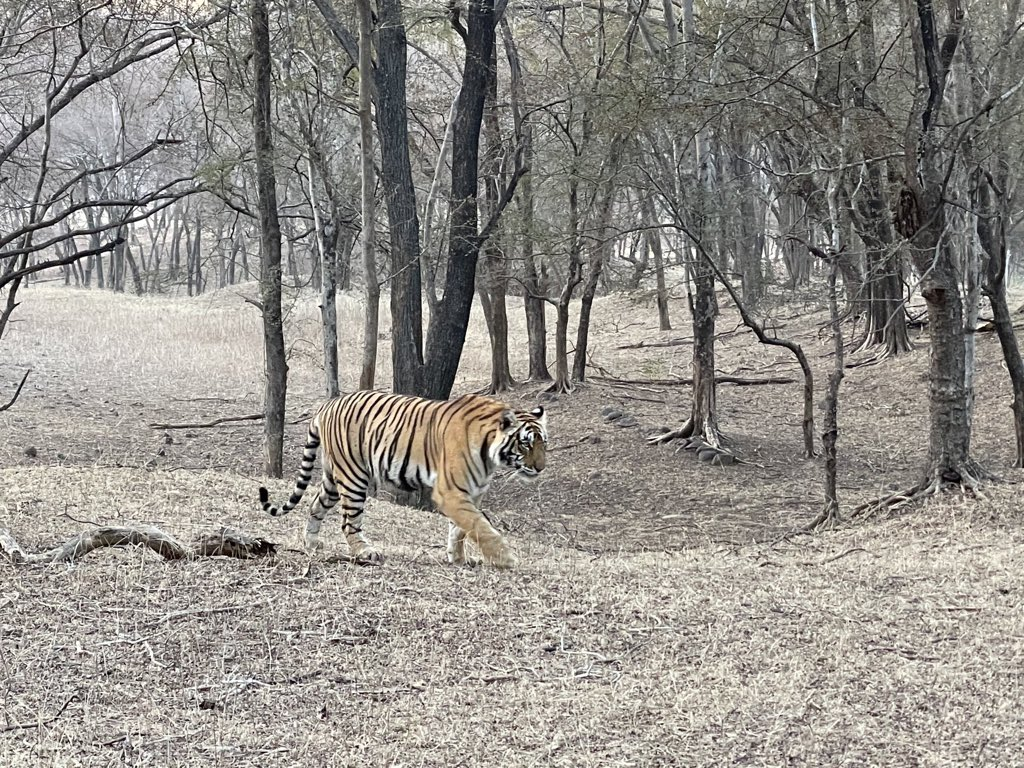 What a moment!! #Wildlife #Ranthambore