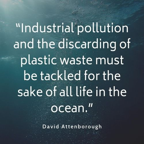 We must make more sustainable choices to secure the future of our planet.   Join the fight to be #plasticfree ♻️🌍     #SirDavidAttenborough #sustainable #noplastic #eco #ecogift #Agenda2030 #supportsmallbusiness #NorthernIreland