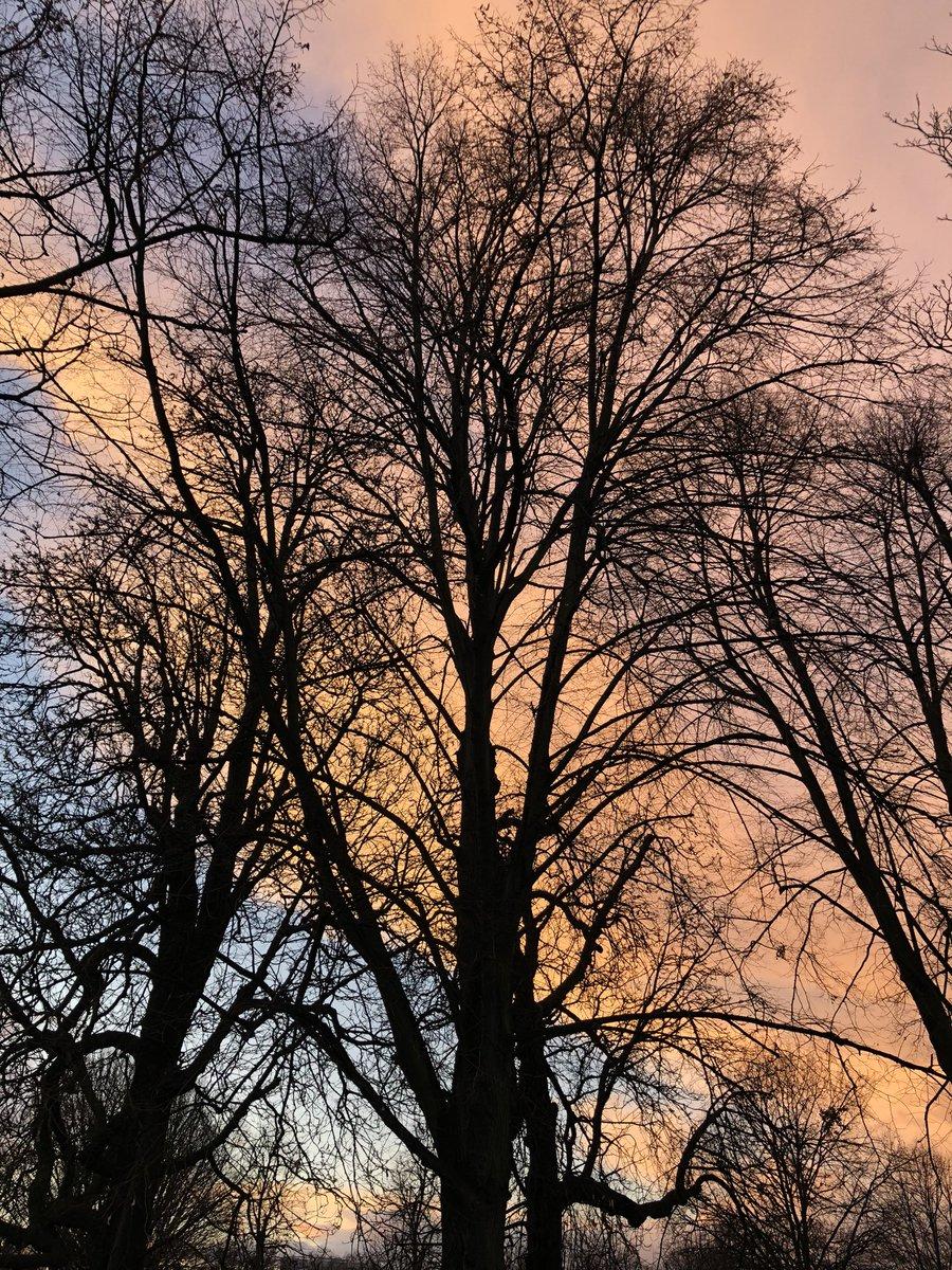 Tree of the day. #SaturdayVibes #London #lockdown #Lockdown3 #lockdownwalks #KensingtonGardens