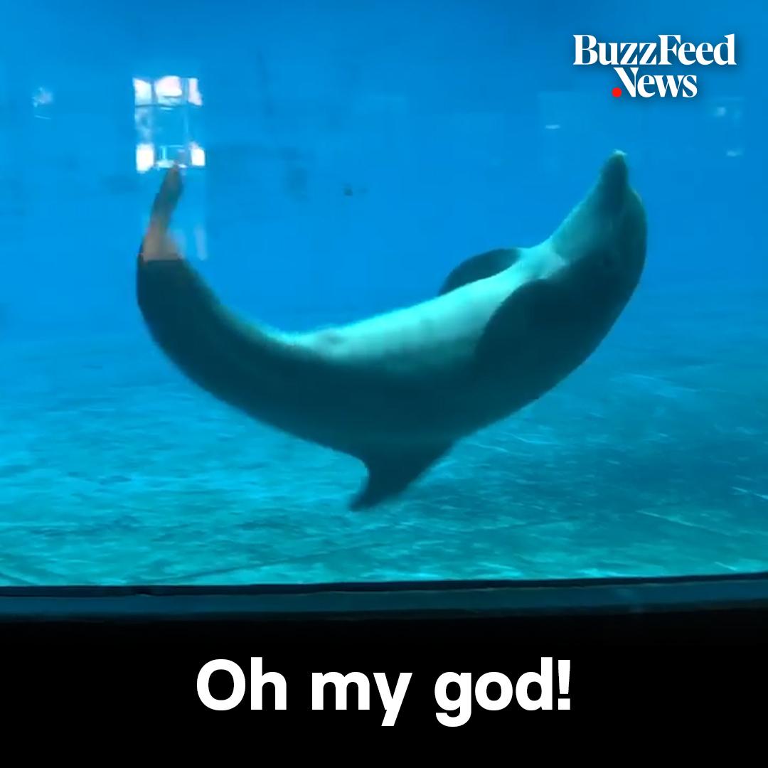 The dolphin surprised everyone when it copied a man doing cartwheels 😍😲 https://t.co/sJYmyUtsrT