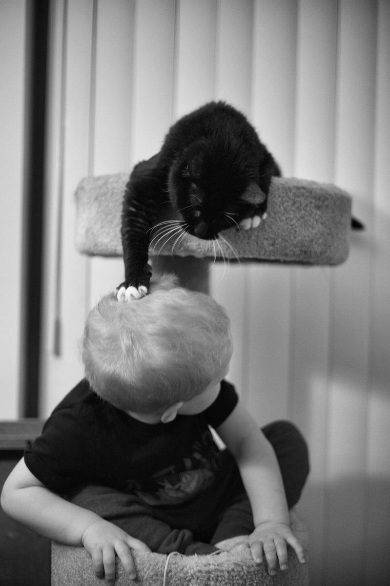 Tribble letting the grandson know who the king of the tower is. #ShotOnCanon #LuminarAI #Caturday