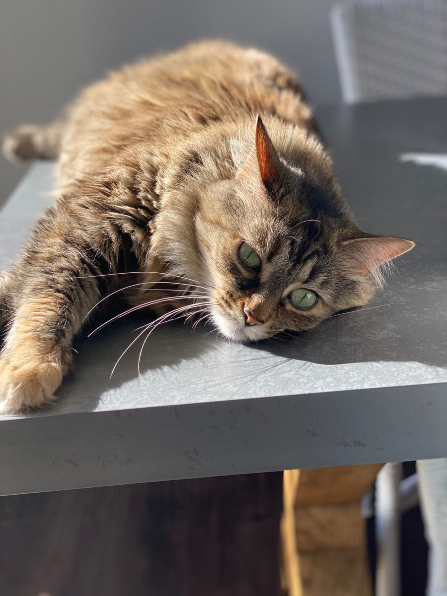 @RadioFreeTom Rare sun, not so rare lazy cat #Caturday