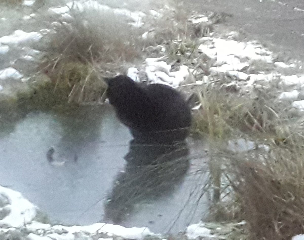 What else to do on a Saturday afternoon than have a leisurely sit on a  frozen pond. #Caturday