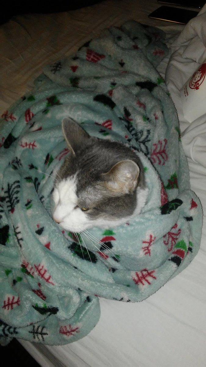 #purrito #cat #cats #Caturday #CatsOfTwitter #nice