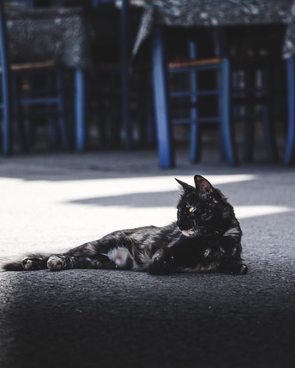 Apparently it's #Caturday so here's a photo of one chilling on the streets of chania on the island of Crete 🇬🇷 #CatsOfTwitter #greece #photography