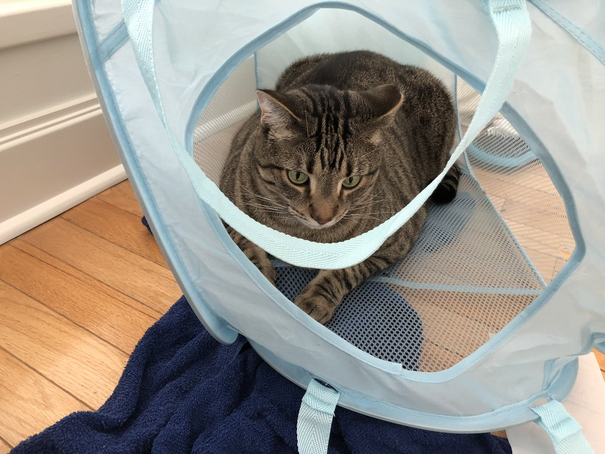 I really just wanted to do my laundry.  but Mr. Lee loves my hamper... so he sat in it. Grayson decided to attack and hilarity ensued.  the animals in my house are going crazyyy  #Caturday #CatsOfTwitter