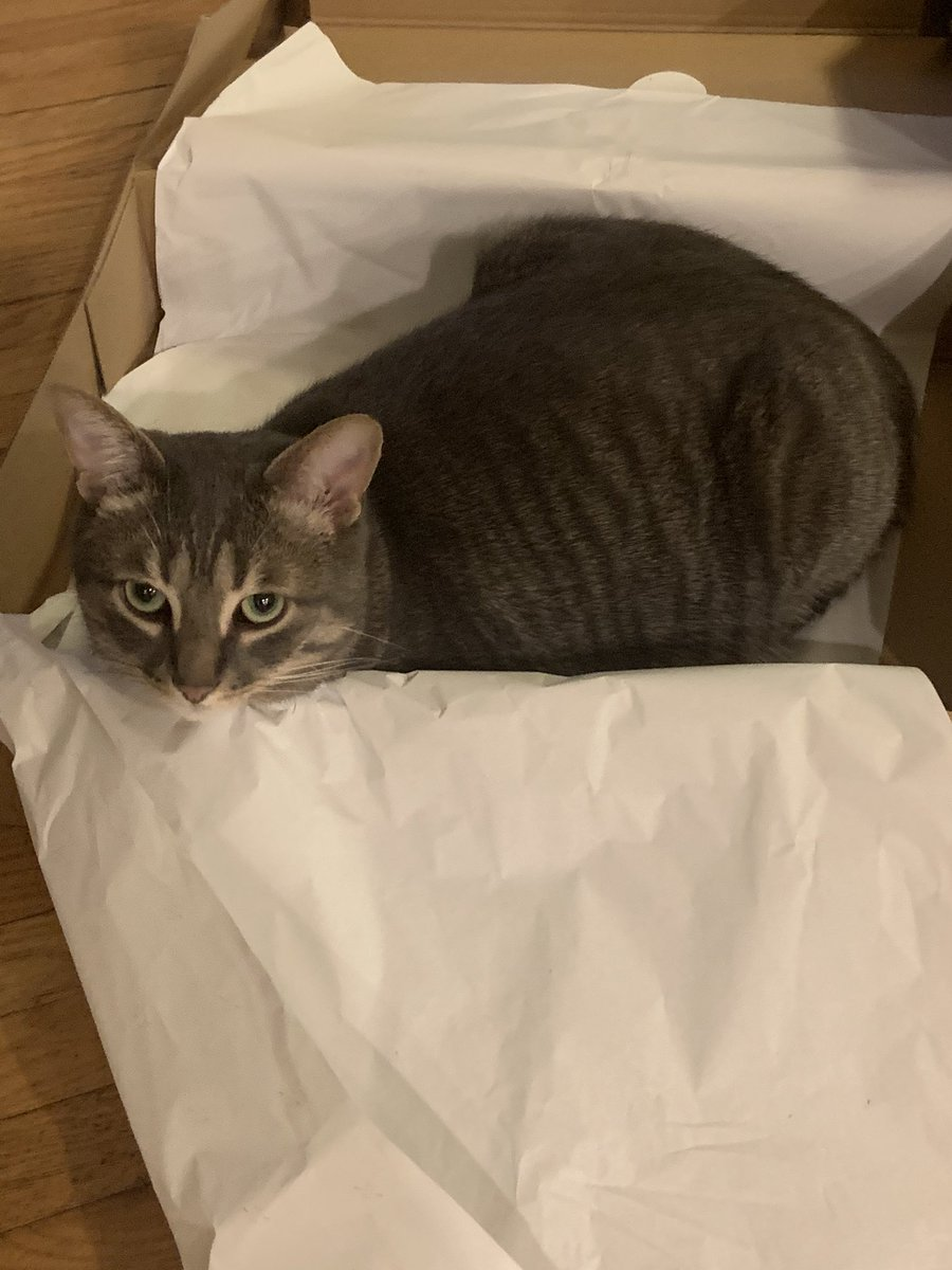#catinabox part 2: The Tabby Returns  #HappyCaturday #caturday #CatsOfTwitter #catsofinstagram #SaturdayMorning #SaturdayThoughts