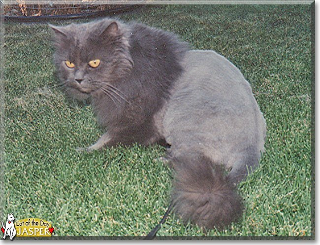 Celebrate #Caturday with #sweet Jasper, a #Persian #kitty #love - read his tale at  #catoftheday #cats #catsofinstagram #cat #CatsOfTwitter