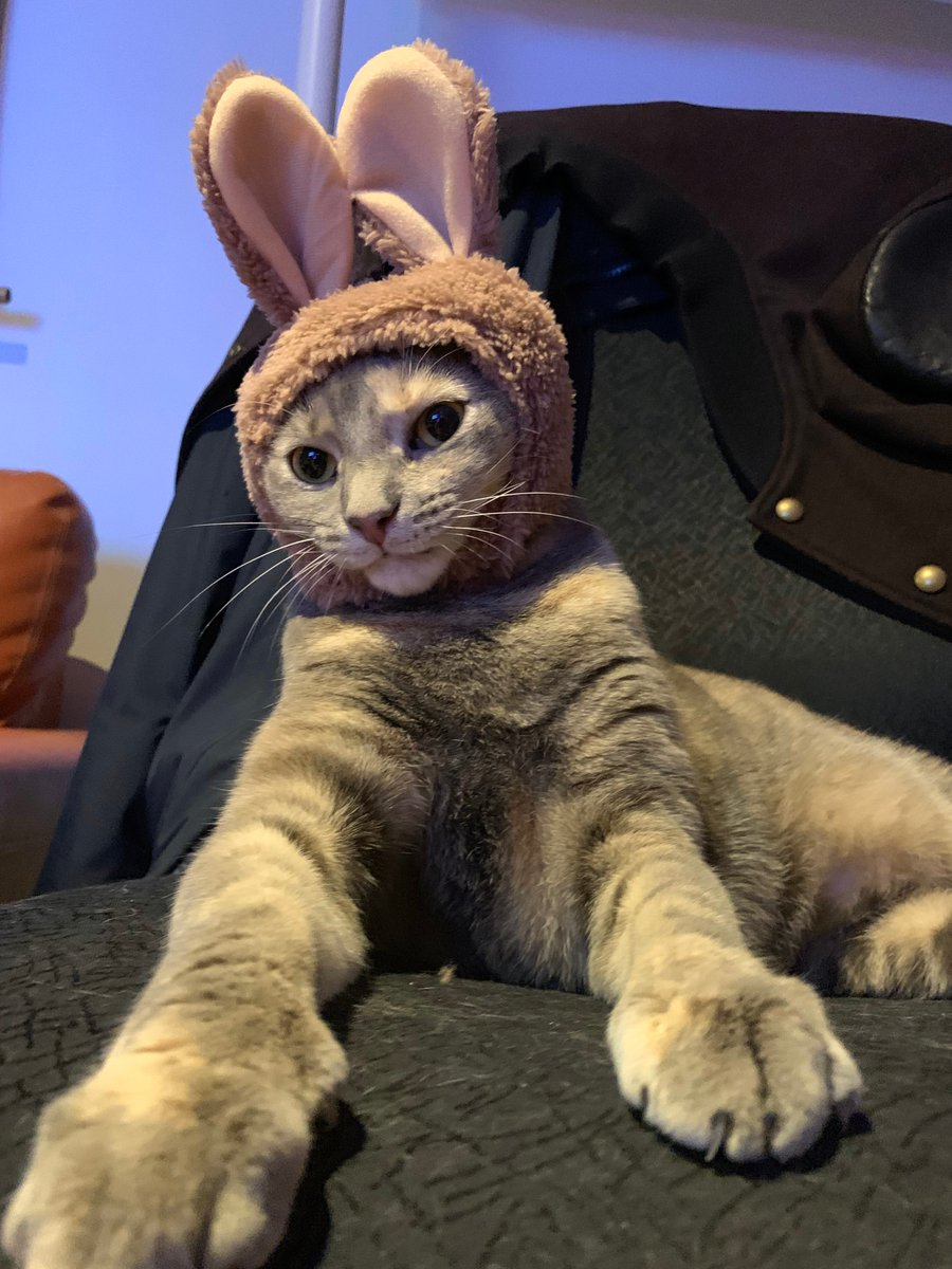 Happy #Caturday from this rabbit.