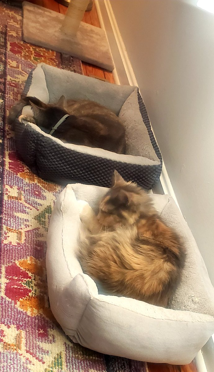 Its a lzy #Caturday with 2 sleepy cats in their beds Ember & Ella
