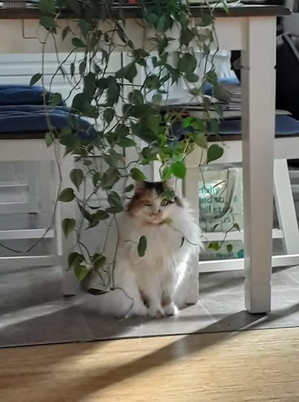 My cat #Caturday #CatsOfTwitter #cats