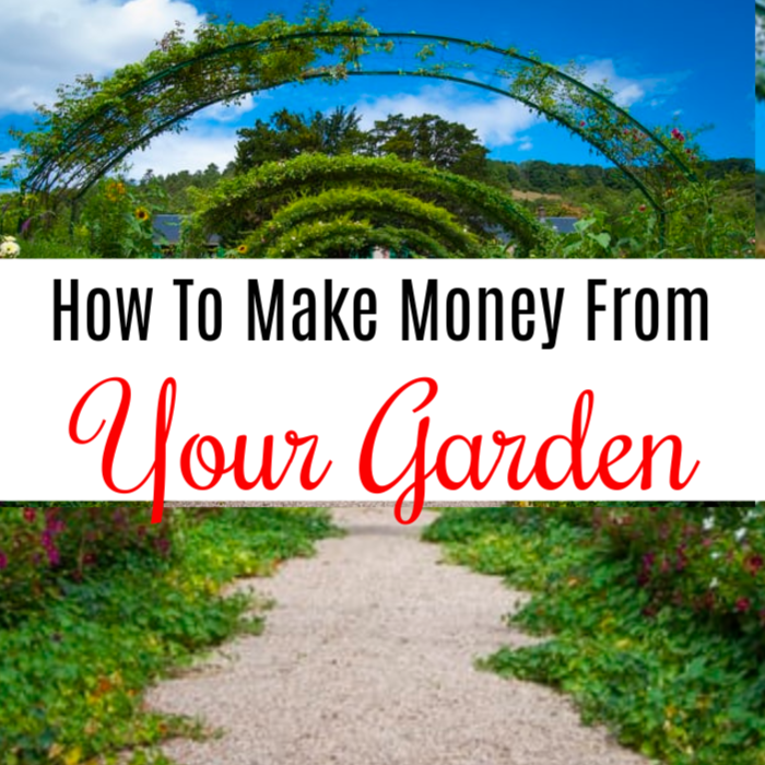 How To Make Money From Your Garden  #plant #wholefoods #gardeninglife #gardeningideas #gardeningaddict #growyourownfood #homegrown #gardening #urbangardenersrepublic #gardeningmakesmehappy