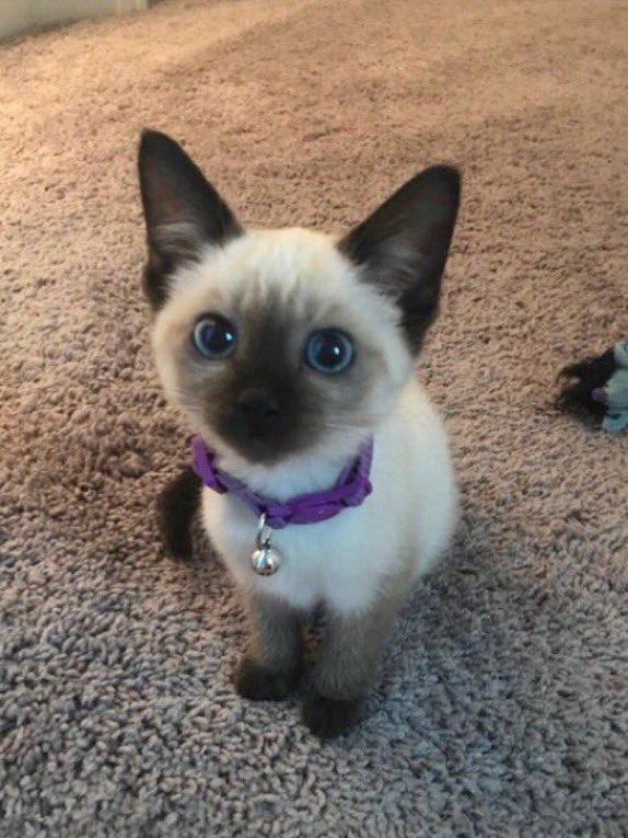 it's #patchestwtselfieday !! here's my cat 🥺🥺