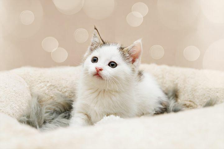 #neko #chat #feline #follow4follow