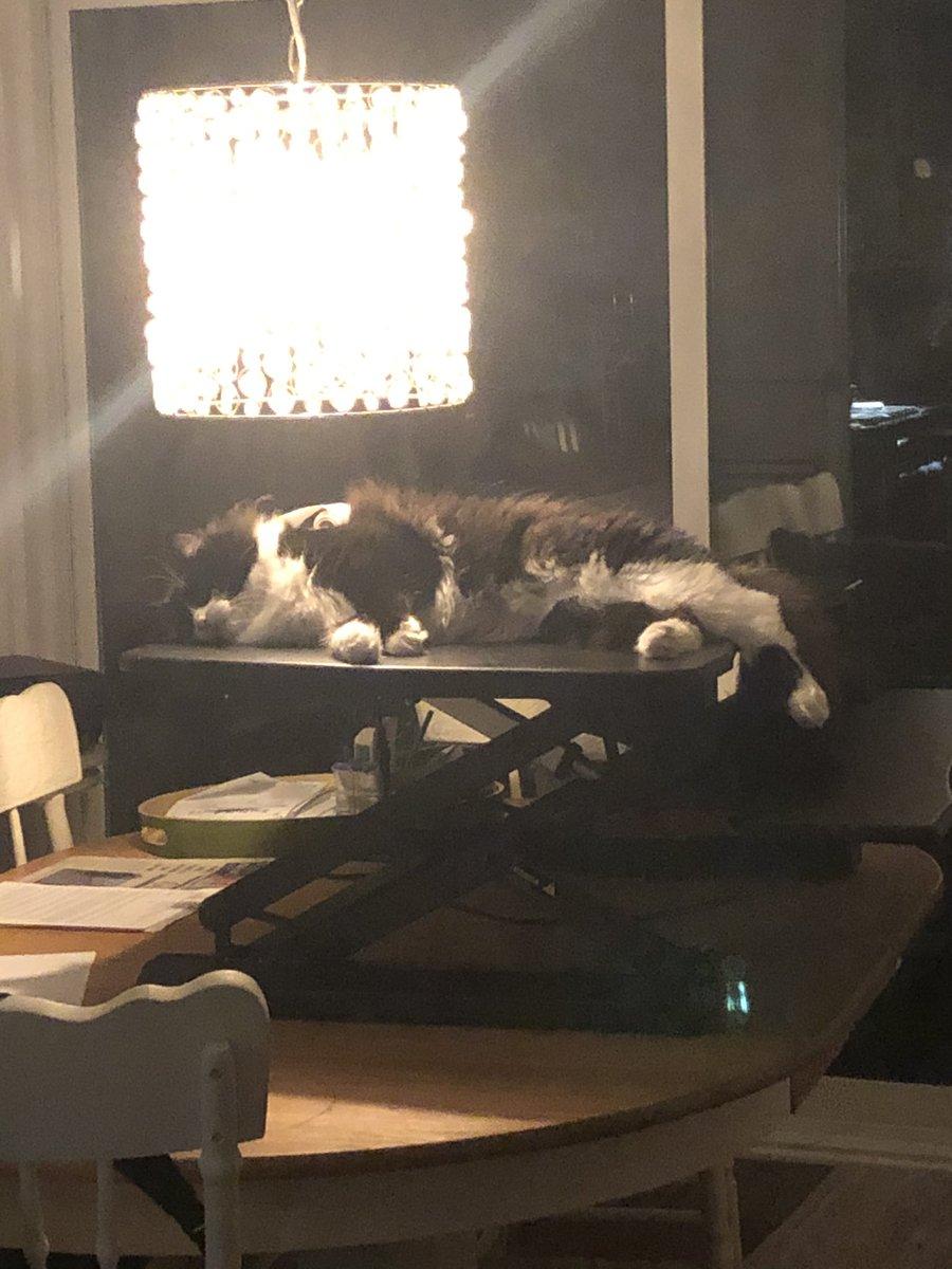 #patchestwtselfieday hehe dumb little cats