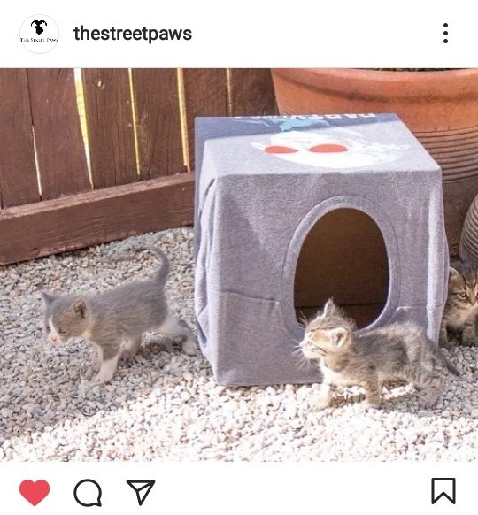 Thank you so much @ thestreetpaws for sharing your #BoxOfHopeForAnimals with us.  Hope your cats loved it😍  Please make your own box and share it with us🙏  Video tutorial:   @BTS_twt #jhope #제이홉 #방탄소년단진제이홈