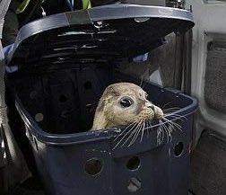 A Saturday for Seals #SealSaturday