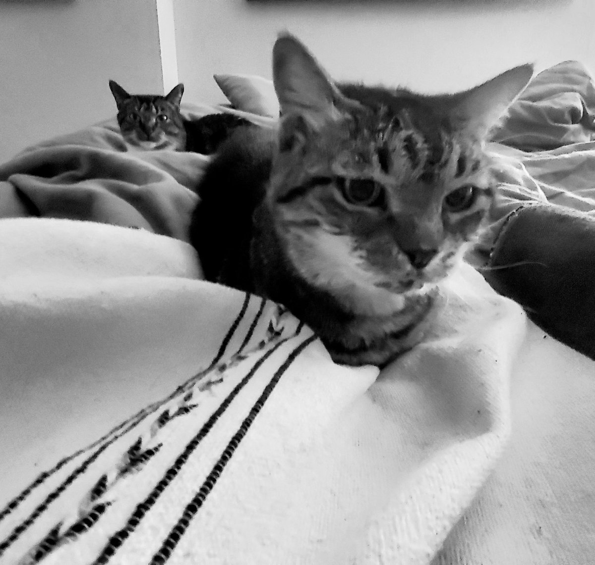 Mickey who is 20 and Bell the cat in the background who is 4 being cuddlebugs #Caturday