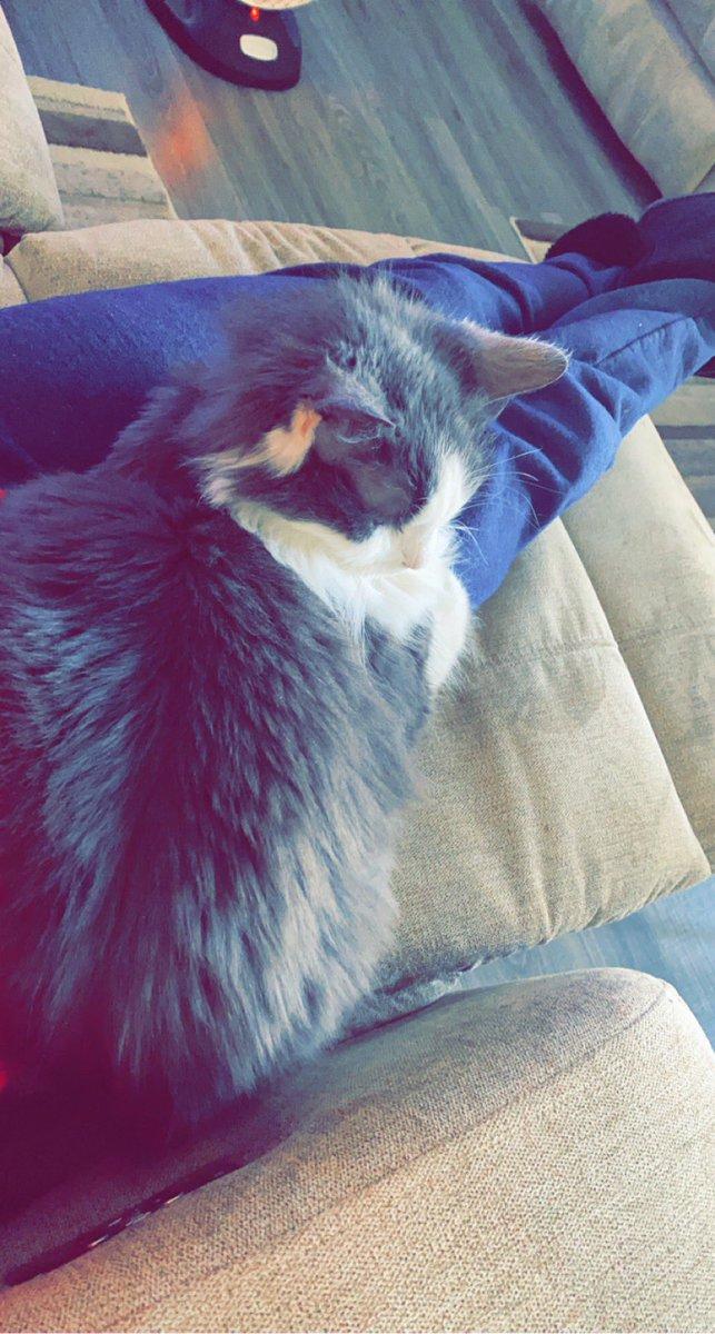 #Caturday #CatsOfTwitter