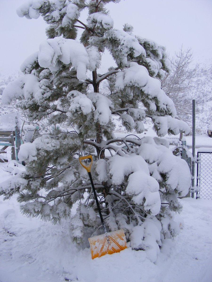 Happy #Wintery #Saturday!🌨️⛄️❄️ #saturdayvibes #winter2021 #snowfall #utahmountains
