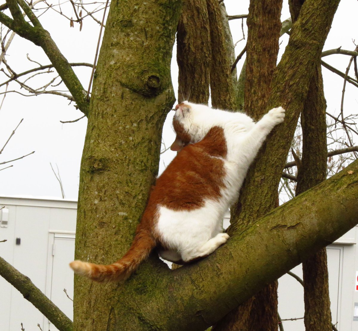The madness of treeeeeees and squirrels!! #Caturday