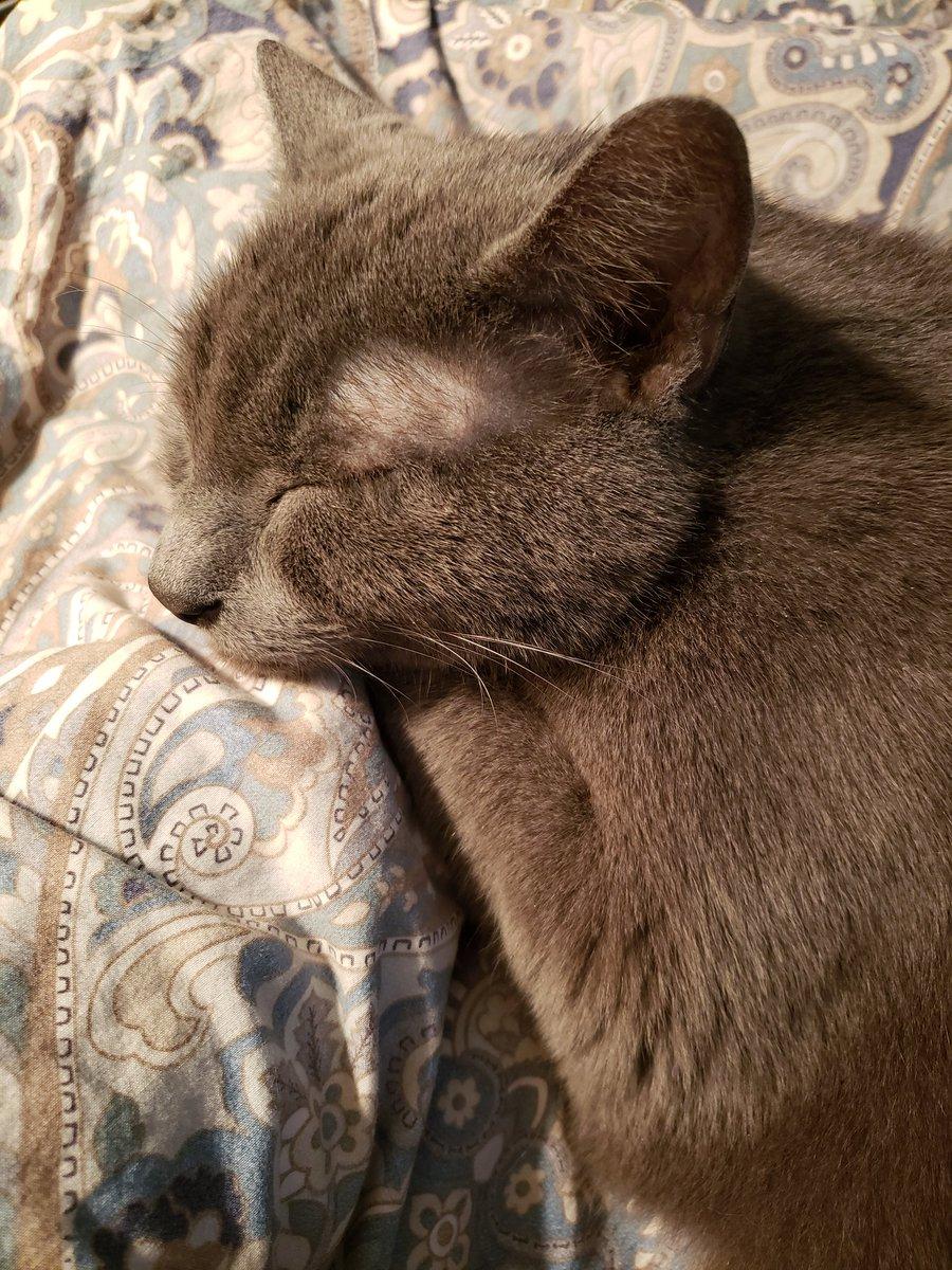 @FelisDave Happy #Caturday ! #naptime