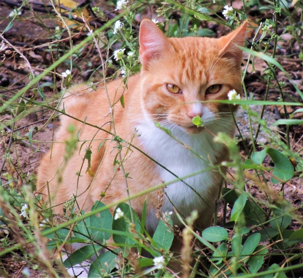 #Caturday  Stray boy out in the wild before he came inside to become our beloved boy Scotty.  @Richard_H