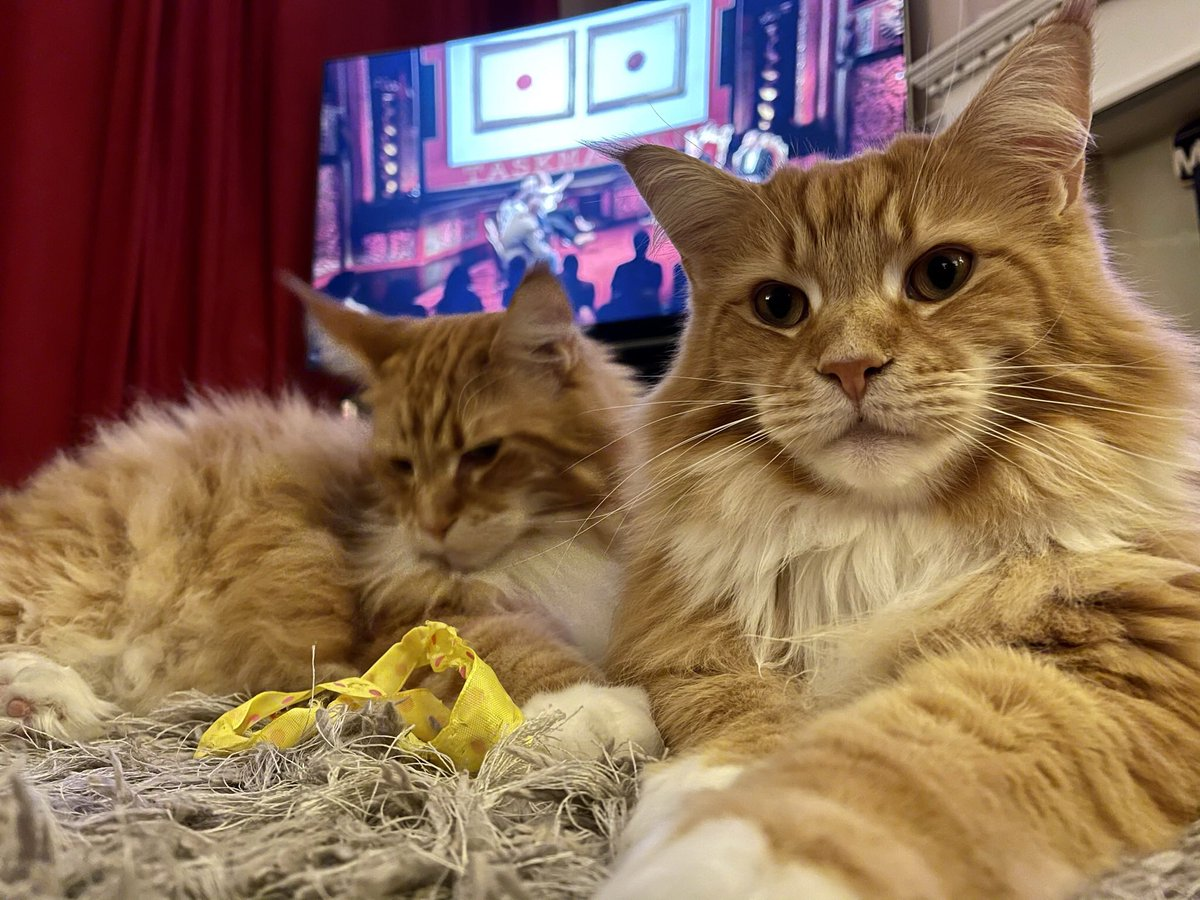 @JamesGunn Right back at ya from our boys Buddy & Gizmo! #Caturday