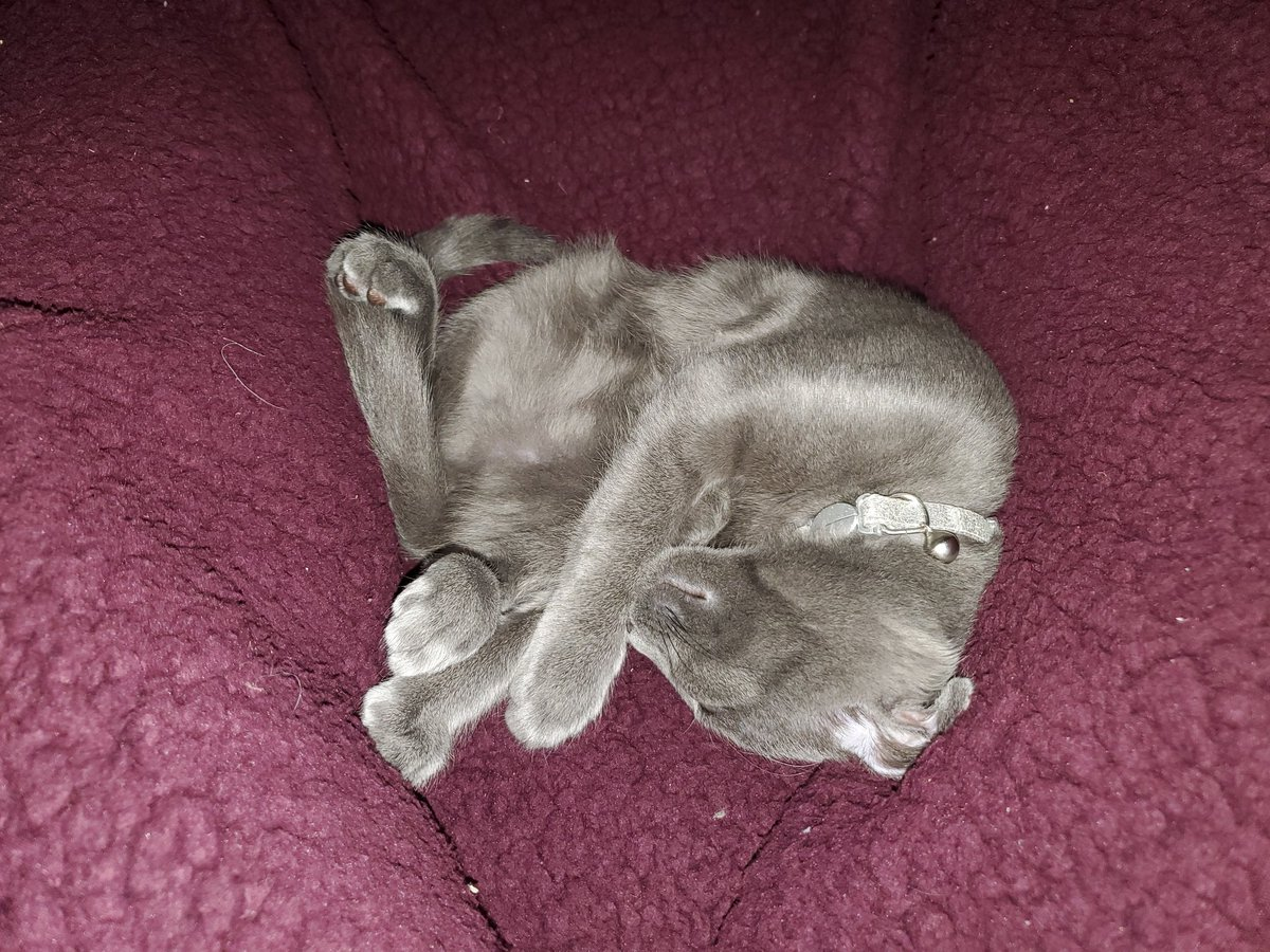 Happy #Caturday! This week's pictures are all marveling at how and where Chloe curls up: canon ball, headless kitty, and playing her back leg like a guitar--how does she do it??