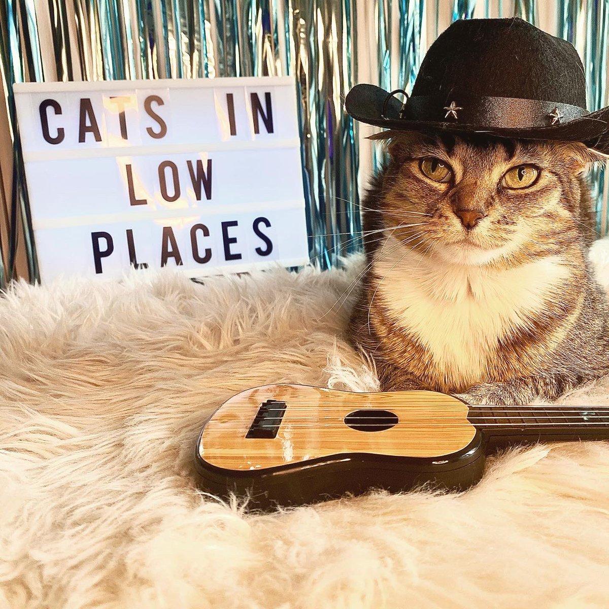 Happy #Caturday y'all!