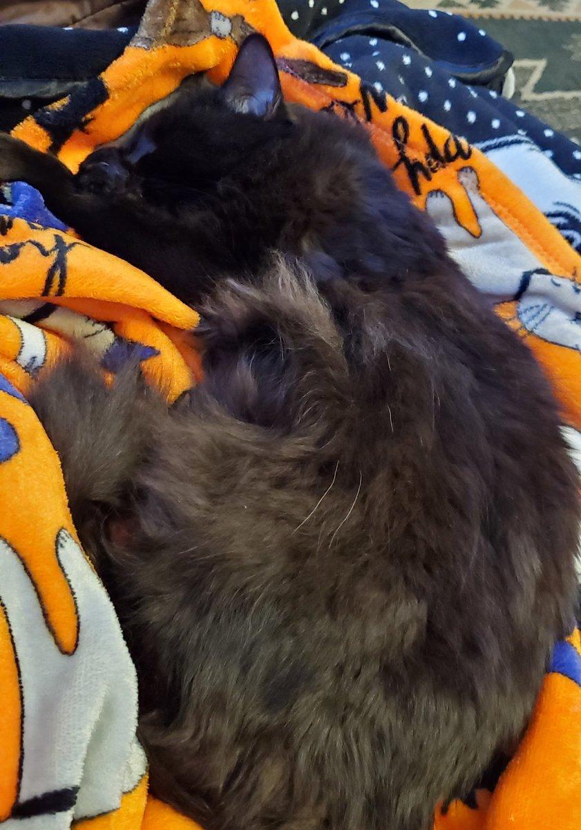 Lazy #Caturday