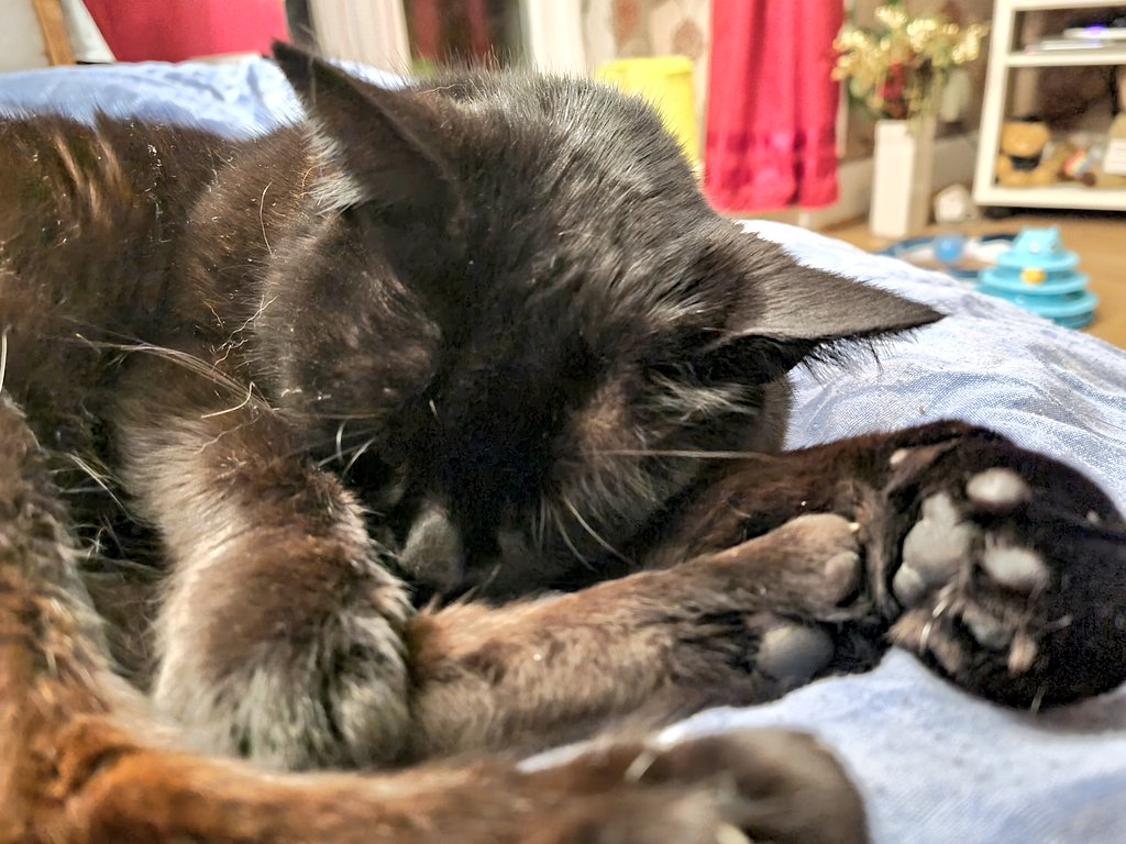 Snoozy toe beans.  #Caturday  #AlanContent