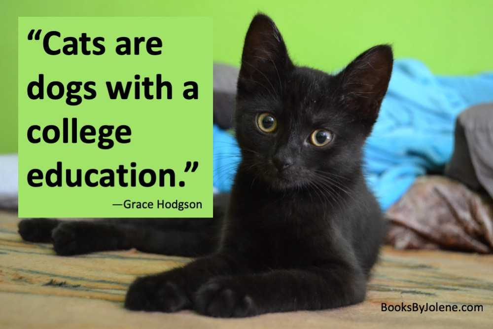 Cats are the masters of higher education. #CatsOfTwitter #Cats #Caturday #amwriting #writingtip #writingcommunity #writerslife #writing